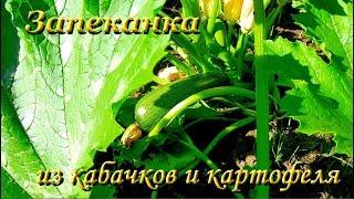 Запечённый кабачок с картофелем. Рецепт овощной запеканки. Видео рецепты от Борисовны.