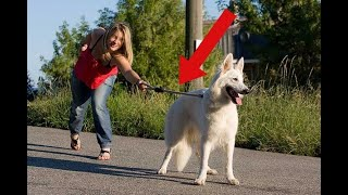 MISTAKES You Could Be Making With Your Pets