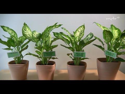 Zimmerpflanzen gießen - Das Experiment | MDR Garten