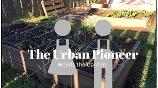 How to Weed a Raised Bed Garden | Wichita Kansas