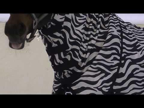 Fliegendecke Zebra von Fedimax