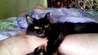 Кошечка - Соня любить спать в обнимку