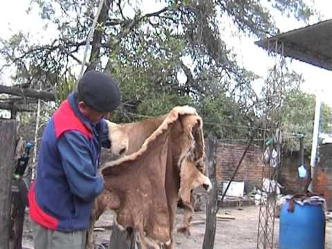 Saber Criollo naturalmente curtido - 2010