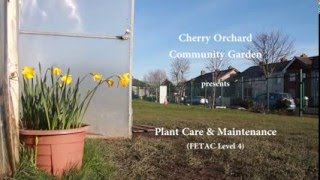 Plant care & Maintenance - Cherry Orchard Community Garden