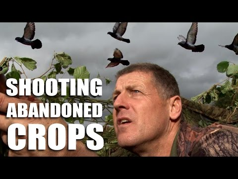 Pigeonshooting over Abandoned Crops