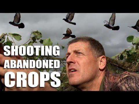 Pigeonshooting over Abandoned Crops