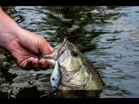 Catch MORE Fish With this Tip!