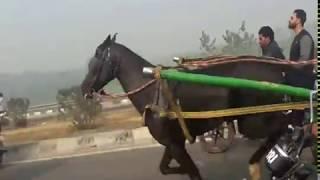 Zahid Ali Horse Race 10KM