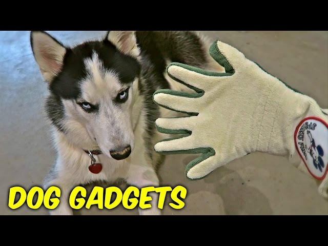 7-dog-gadgets-put-to