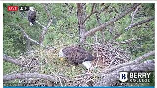 Berry College Eagles: Sep 19, 2020: Mom Berry Injuries and Dad brings food