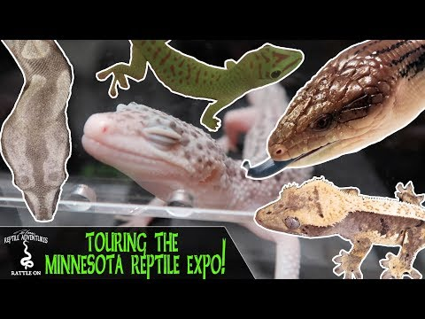 DKRA: Touring a Huge European Reptile Expo | The Reptile Report