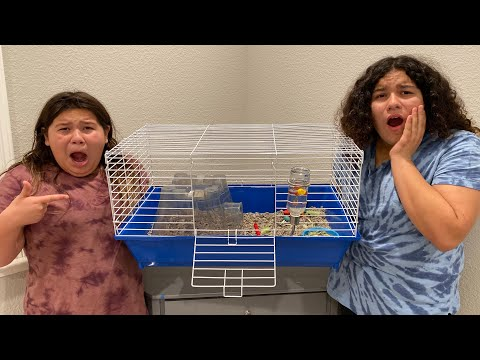 WE LOST OUR GUINEA PIG - OMG!