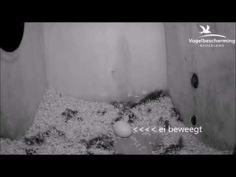 11.03.19 (Het ei beweegt!)
