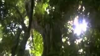 preview picture of video 'Tours-TV.com: Kibira National Park'