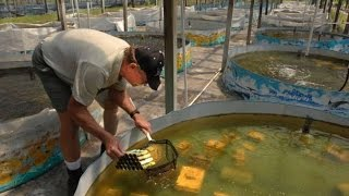 Бизнес идея   Ферма по выращиванию речных раков   Выбираем правильно место