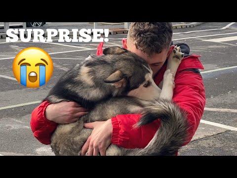 De liefde en trouw van een dier