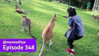 Cara Selfie Sama Kangguru! - Lone Pine Brisbane