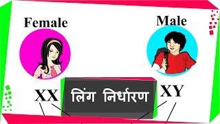 Human Reproduction - मनुष्यो में लिंग निर्धारण  - Gender determination - in Hindi