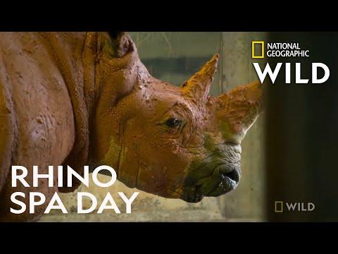 Rhino Gets a Mud Bath   Secrets of the Zoo
