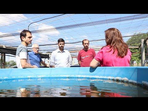 Se colocaron jaulas con alevinos en La Laguna de Gómez