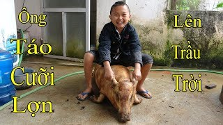 Thịt Lợn Rừng 50kg Ăn Tất Niên Mừng Ngày Ông Táo 23 Tháng Chạp