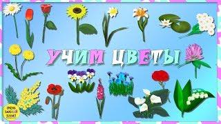 Учим слова. Цветы для малышей! Развивающие мультики для детей