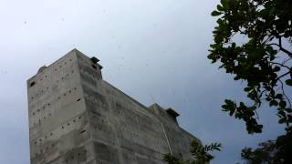 Nhà yến Bình Phước,yến sào cung đình Thiên Phú Lộc