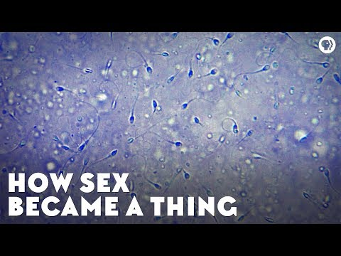 Download How Sex Became a Thing HD Mp4 3GP Video and MP3