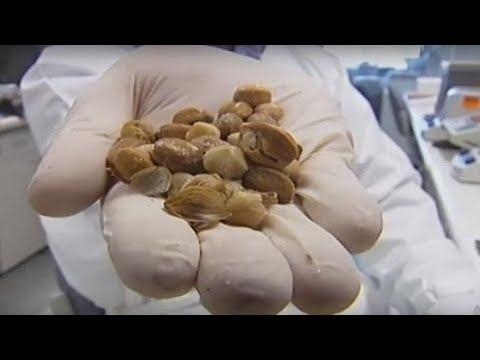 Leki do leczenia łagodnego rozrostu gruczołu krokowego