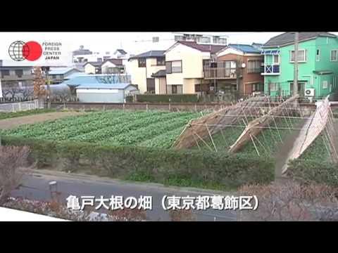 東京の農業プレスツアー「再び注目される江戸野菜:亀戸大根」