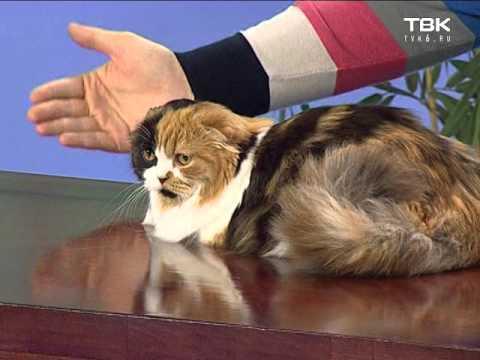 Исправляем непослушных кошек