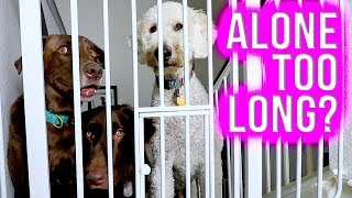Dogs Left Alone // How Long is TOO Long?
