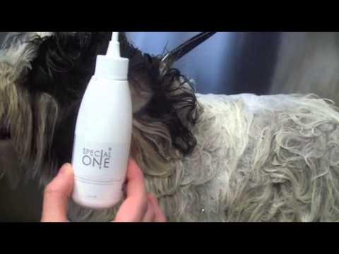 Aqua Oto: per la corretta pulizia delle orecchie del tuo cane