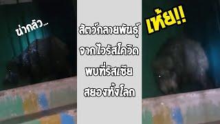 เรื่องแบบในหนังซอมบี้มันมีจริง เจอสัตว์กลายพันธุ์จากไวรัสโควิด สยองแล้ว!!... #รวมคลิปฮาพากย์ไทย