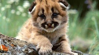 Веселые зверята: подборка видео приколов с детенышами животных