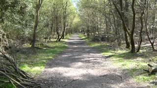 preview picture of video 'The Deepdene Walk- from Dorking via Leith Hill in HD 15 April 2014'