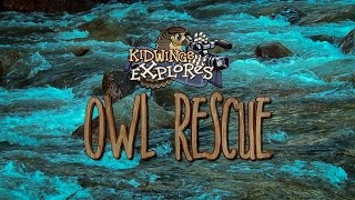Barn Owls: Owl Rescue