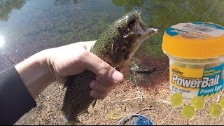 Pond Fishing For Trout With Powerbait. CATCH AND COOK!! (Dover, DE)