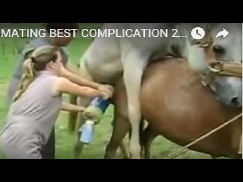 NEW HORSE MATING BEST COMPLICATION 2016