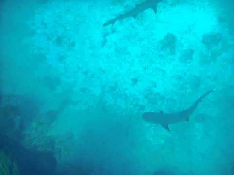Die Haibande, Addu Atoll,Malediven