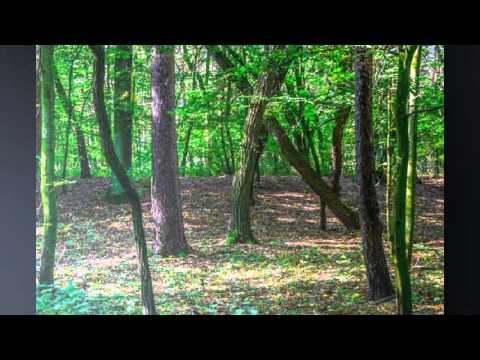 Fototapeten Wald