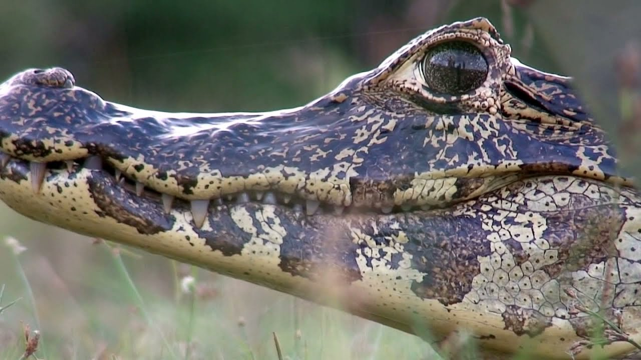 The Pantanal: A Jewel of South America
