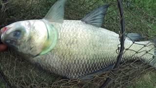 Best Catla Fishing Videos By Primitive Fish Hunter