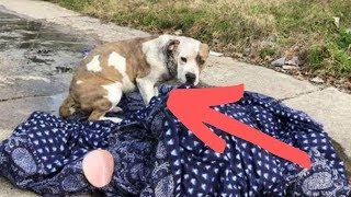Rescue Worker Breaks Down When She Discovers The Reason Behind A Dog's Odd Behavior