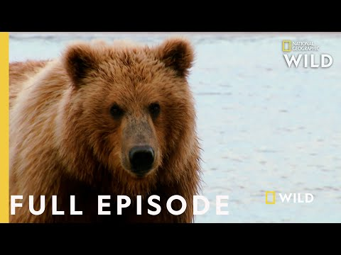 Grizzly Battleground (Full Episode) | Alaska's Grizzly Gauntlet