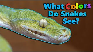 How Snakes' Senses Compare to Ours! by Snake Discovery