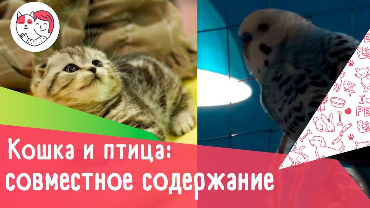 Совместное содержание кошки и птицы: 4 совета
