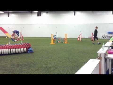 Sage 10/14/16 Dalmatian Club agility trial