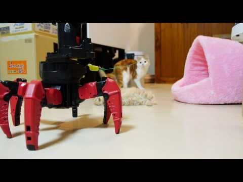 Cats Vs Robot In A Lethal Battle Of Cute