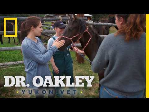 Boomer, the Hoarse Horse | Dr. Oakley, Yukon Vet